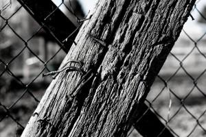 Holz Eisen Zeit II